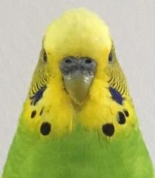 feathsyu